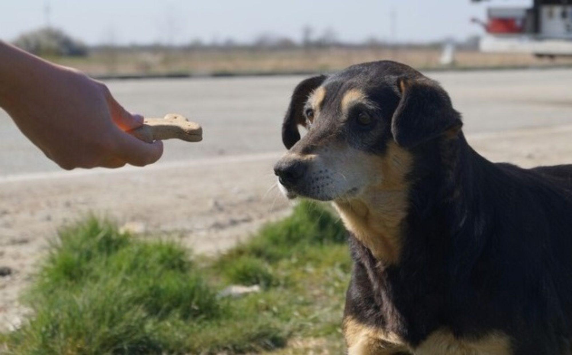 Mira - Tierhilfe e.V.