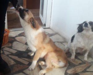 Hunde wissen, ob sie mit einem guten mädchen ausgehen